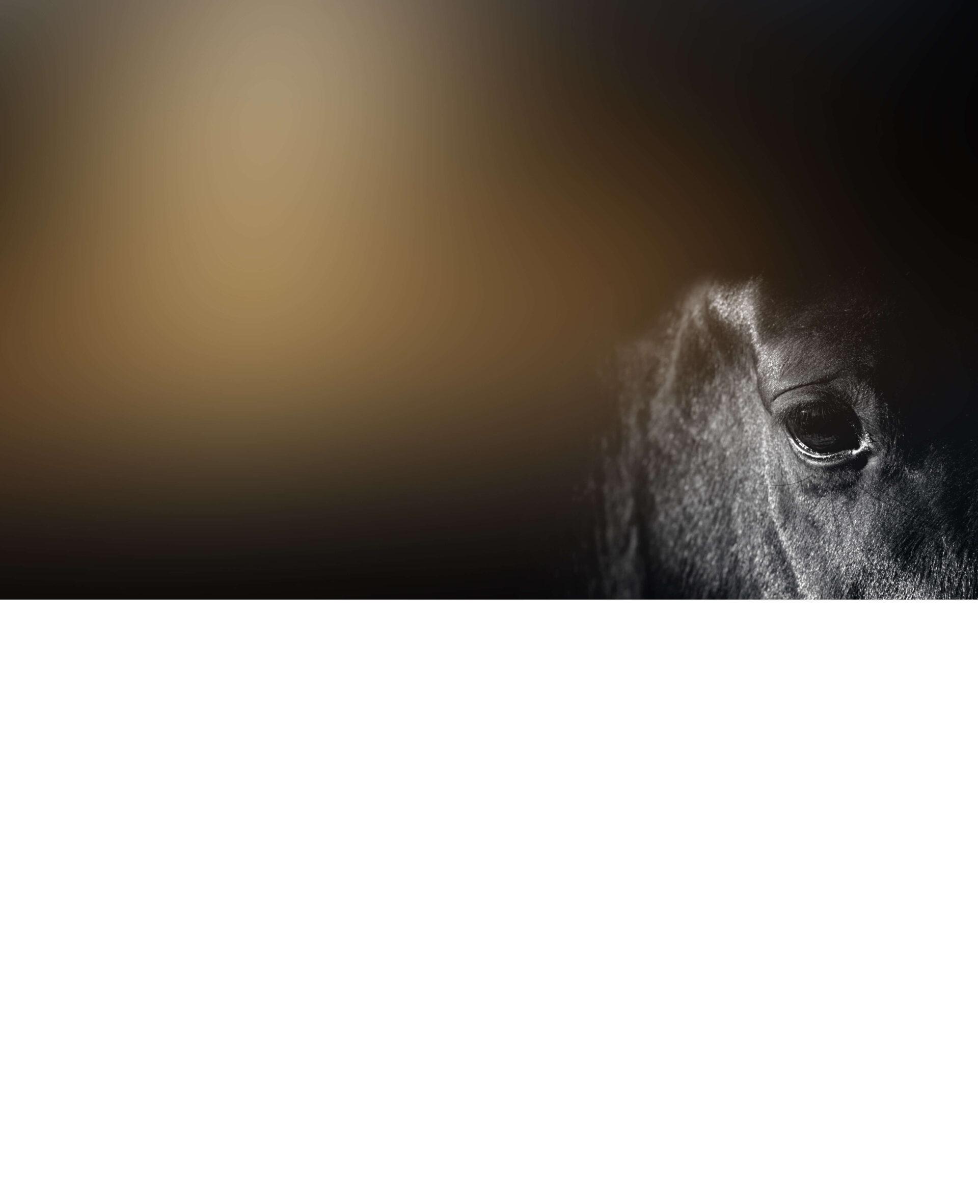 Führungskräftetraining am Pferd - das Konzept